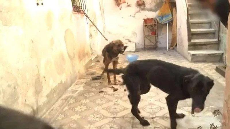 Maltrataba los perros de ella porque lo dejó — Venganza despiadada