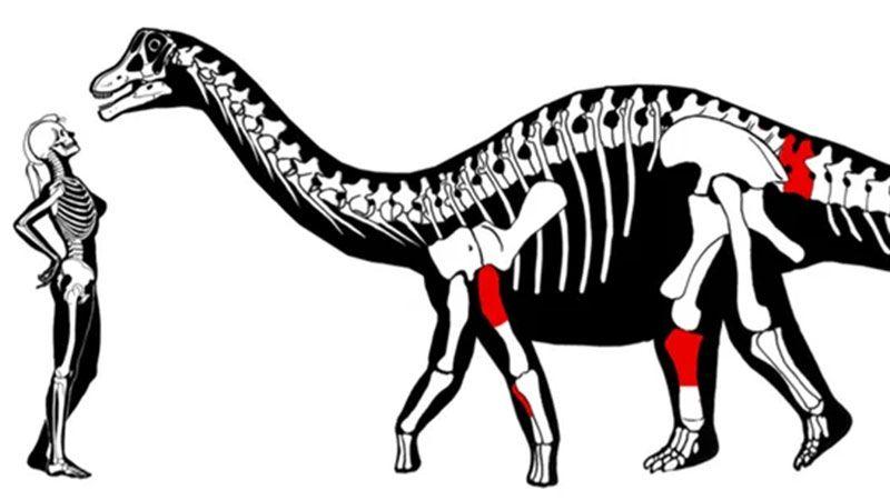 La investigación fue liderada por el paleontólogo e investigador del Conicet Sebastián Apesteguía y su colega Pablo Gallina