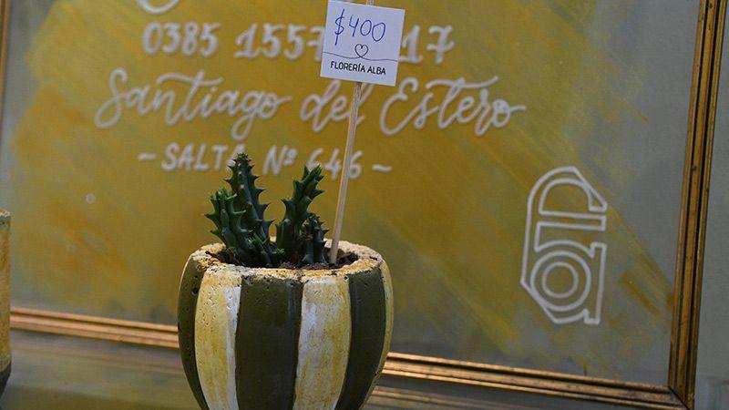 Cactus y suculentas desde $400
