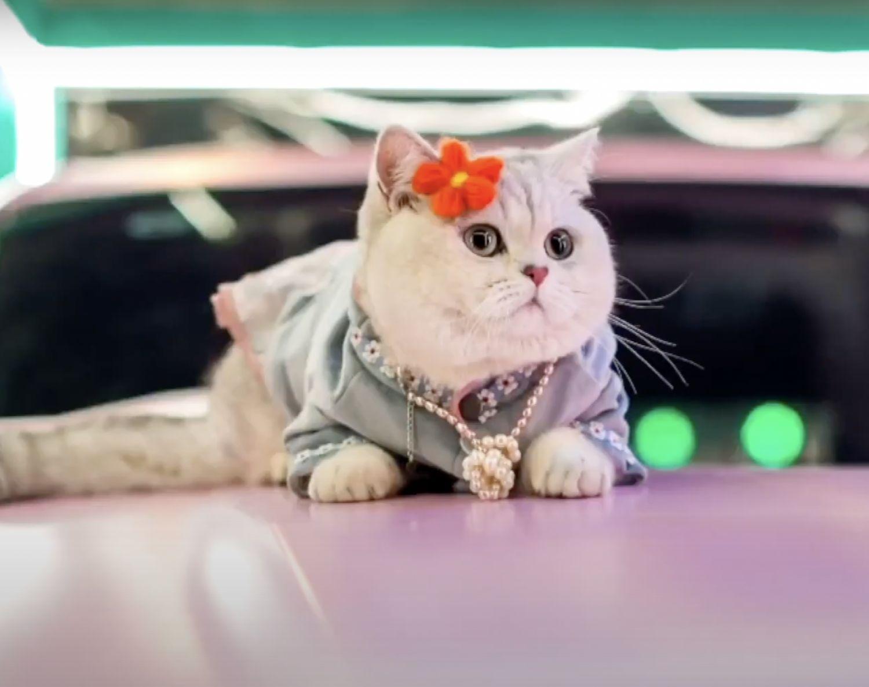 Gato influencer.